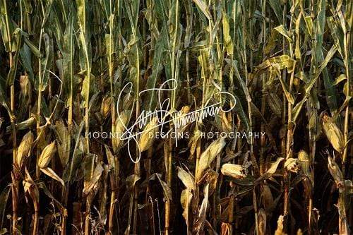 Kate Lowa Cornfield Backdrop for Photography Designed by Sarah Timmerman