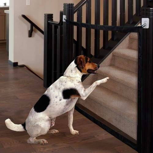 SafeGuard - Filet retractable pour chiens