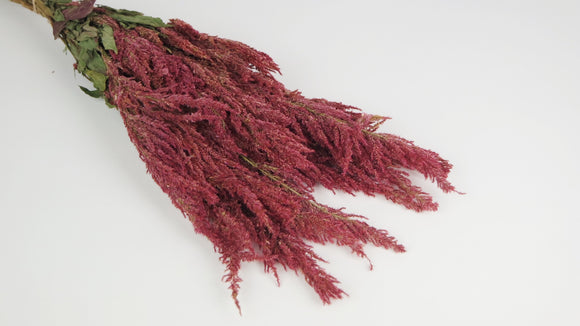 Celosia - 1 bouquet - Couleur naturelle rose