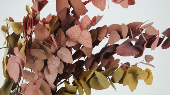 Stabilised eucalyptus Stuartiana - 1 bouquet - Autumn