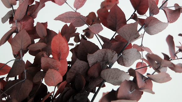 Stabilised eucalyptus Stuartiana - 1 bouquet - Red