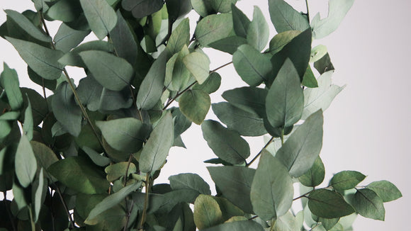 Stabilised eucalyptus Stuartiana - 1 bouquet - Green