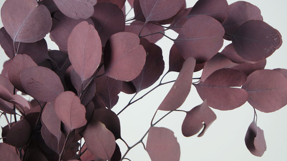 Stabilised eucalyptus Populus - 1 bouquet - Red