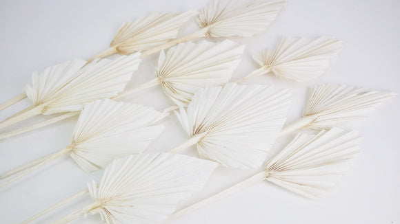 Dried Palms spear M - 10 stems - White