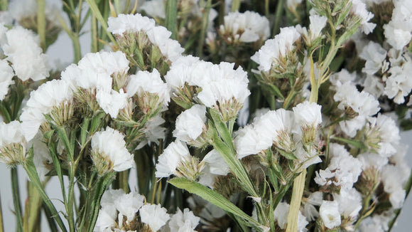 Dried statice - 1 bouquet - White