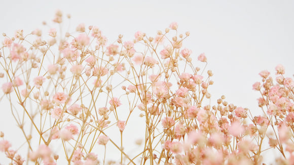 Stabilised gypsophila - 1 bouquet - Light pink