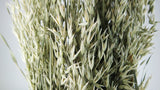 Dried oat - 1 bunch - Natural colour