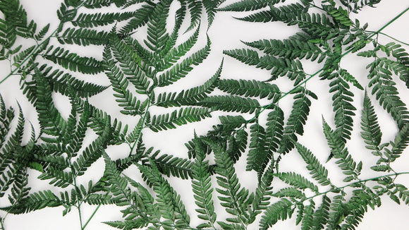 Stabilised leather fern - 1 bouquet - Green
