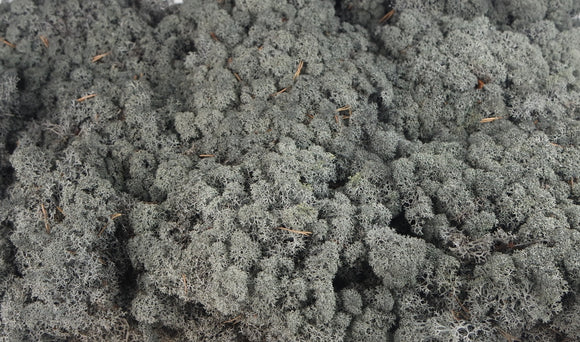 Stabilised lichen - 300 g - Black
