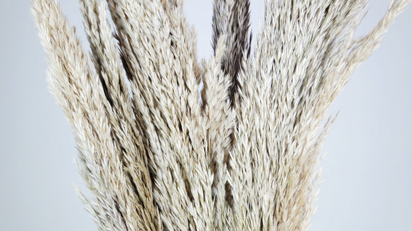Miscanthus 90 cm - 6 tiges - Couleur naturelle