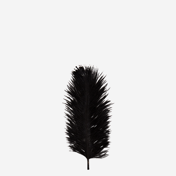 Ostrich feathers - 6 pieces - Black