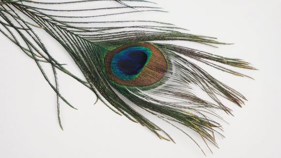 Peacock Feathers Eyes 115 cm - 3 pieces - Natural