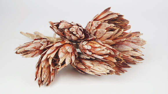Protea repens - 1 bouquet - Ambre