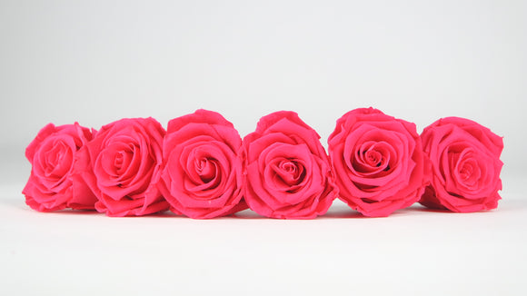 Stabilised roses 6,5 cm - 6 rose heads - Pink
