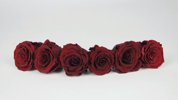 Preserved roses 4,5 cm - 6 rose heads - Red