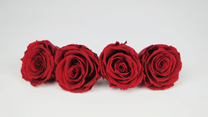 Preserved roses 5,5 cm - 4 rose heads - Red