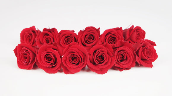 Stabilised roses 4 cm - 12 rose heads - Red