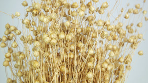 Dried linen - 1 bunch - Natural colour