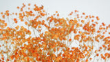 Gypsophile stabilisé - 1 bouquet - Orange clair