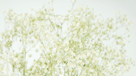 Preserved gypsophila - 1 bunch - Natural colour