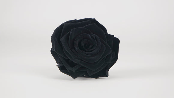 Stabilised rose 8 cm - 1 rose head - Black
