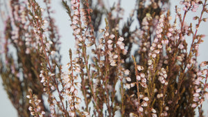 Stabilised heather - 1 bouquet - Pink