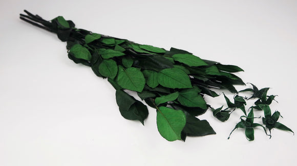Preserved rose stem 60 cm with sepals - 6 stems - Green