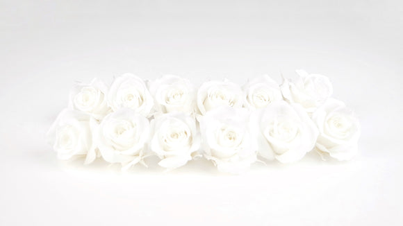 Stabilised roses 4 cm - 12 rose heads - White