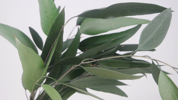 Preserved eucalyptus Willow - 1 bunch - Green