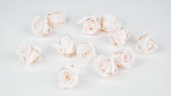 Stabilised roses 3 cm - 12 rose heads - Nude