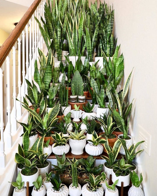 House Plants - Remedy For The Quarantined