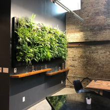 Load image into Gallery viewer, Living Wall Kit II