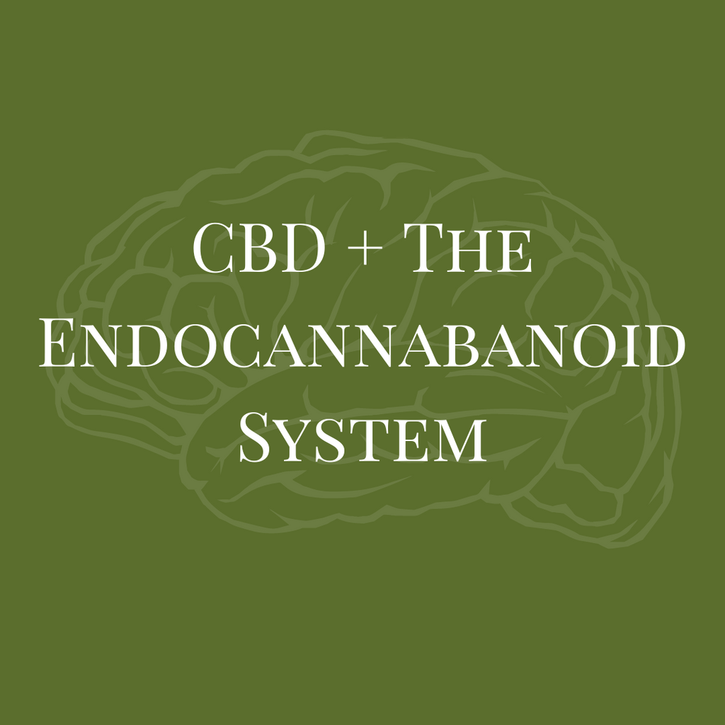 CBD and the Endocannabanoid System