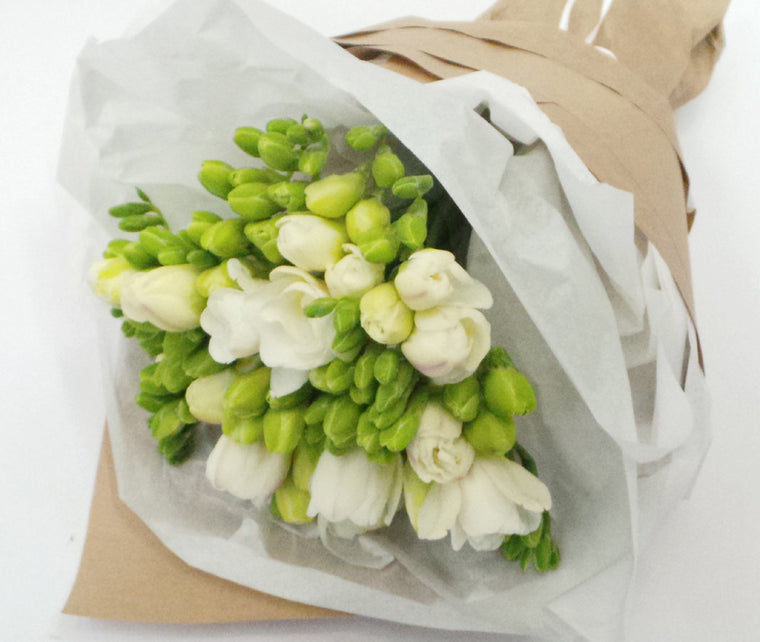 WHITE FREESIA'S