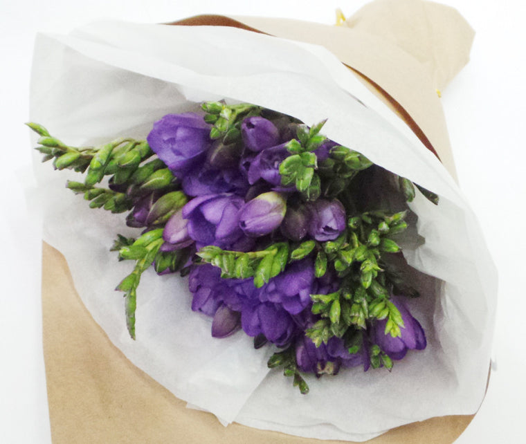 PURPLE FREESIA'S
