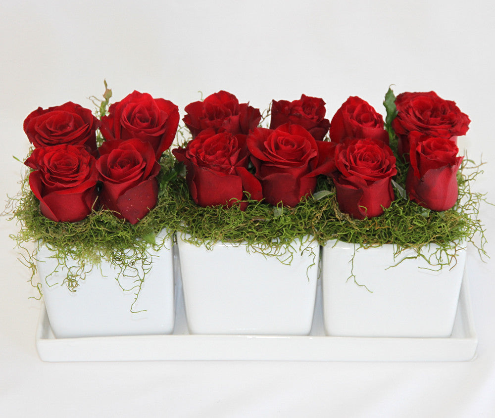 Twelve red roses set in a bed of green moss,ceramic pots