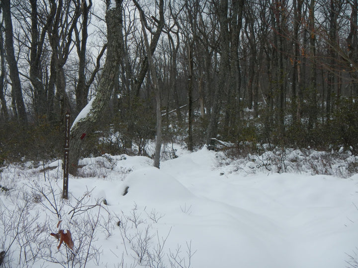 Tussey Mountain Trail: An Attempt at Snowshoeing