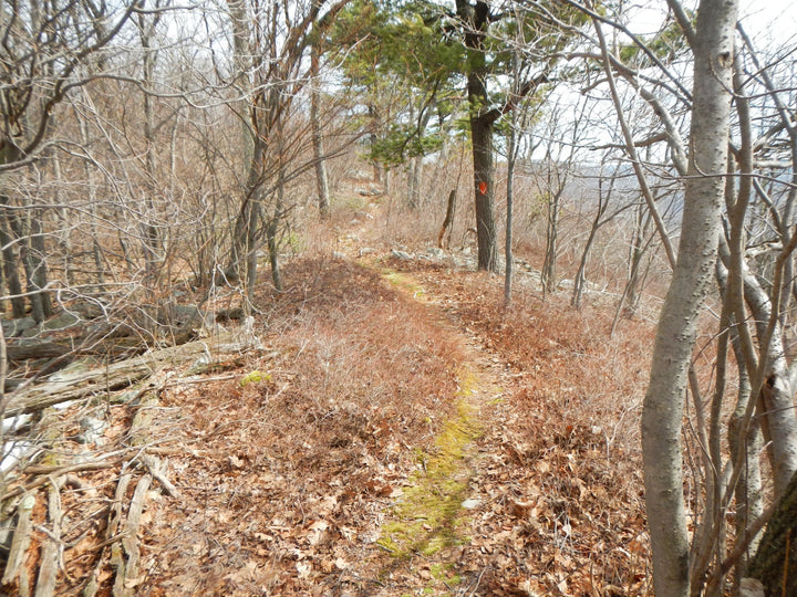 Musser Gap: Hiking on the Musser Gap Trail