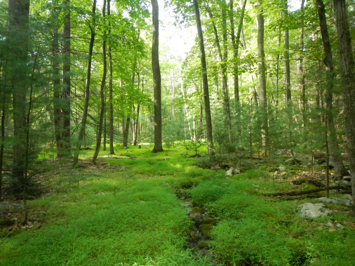 Hiking the Bear Gap and Lingle Valley Trails