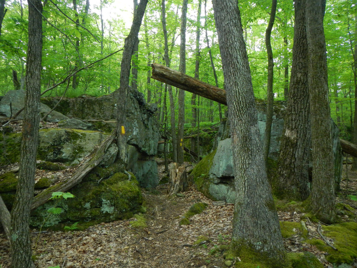 Fred Woods Trail: A Rock City and Awe Inspiring Vistas