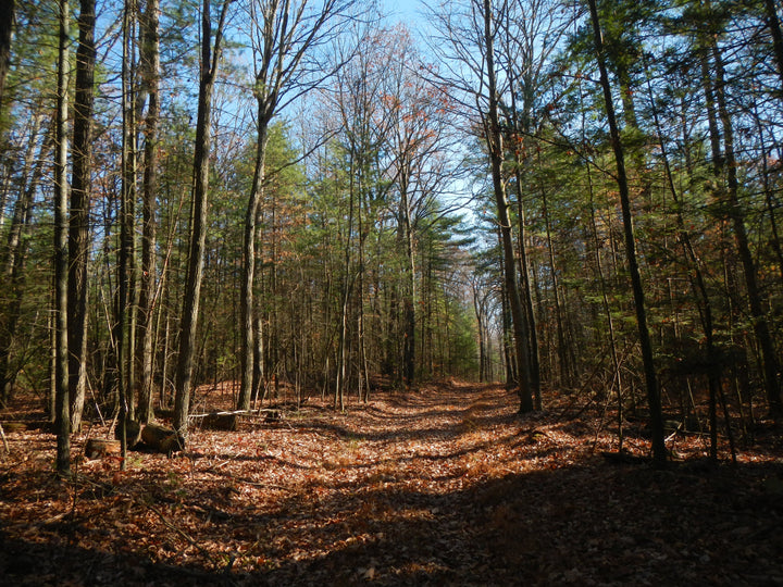 West of Greenwood Furnace: The Dixon and Viantown Trails