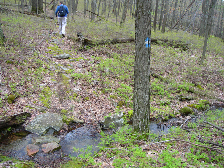Shingletown Gap: From Bald Knob to the Mid State Trail