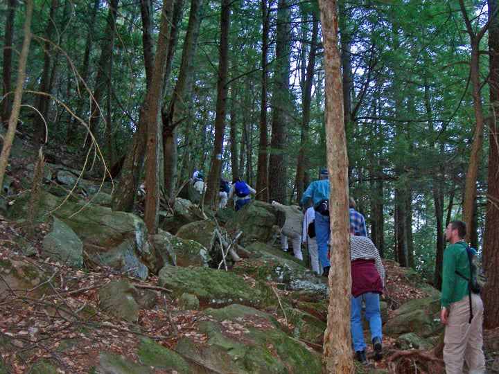 Shingletown Gap: Hiking with the Ridge and Valley Outings Club