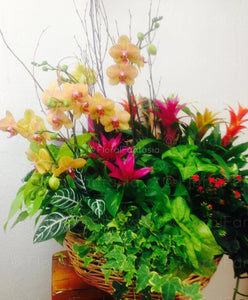 Assorted green and blooming plants, planted together in a basket or wood container. Deluxe gardens include Orchids.