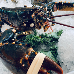 Locally Caught Live Lobster