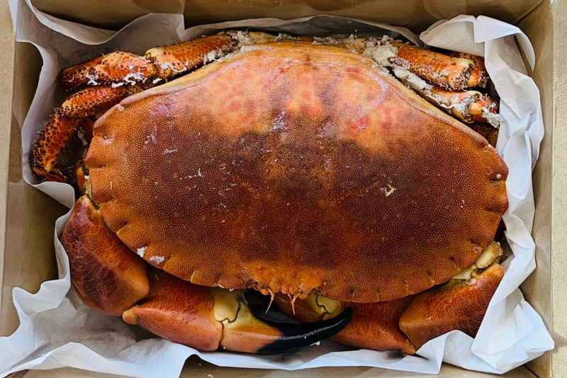 Whole Cooked Crab (600-800g)