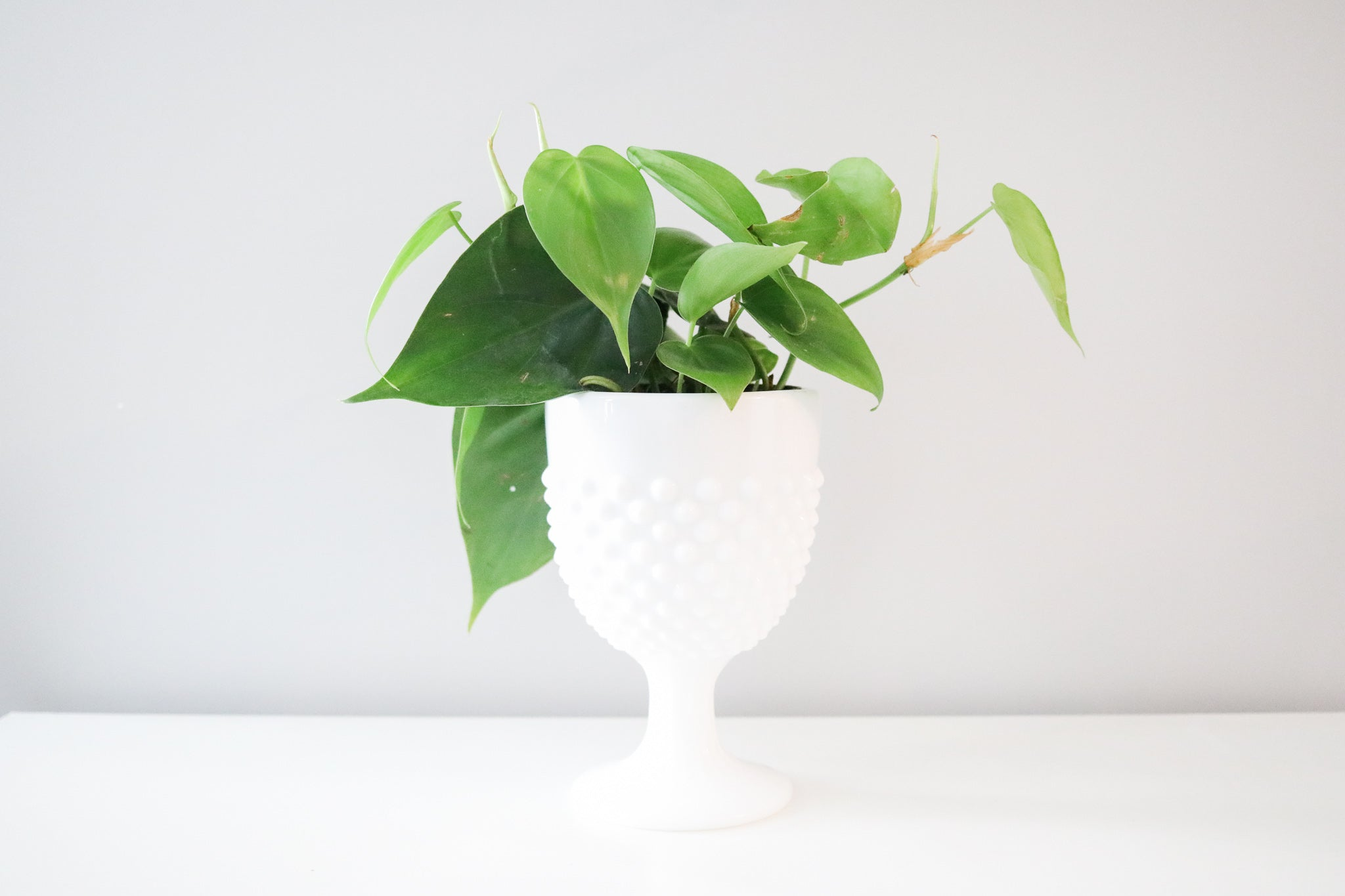 Milk Glass Planter