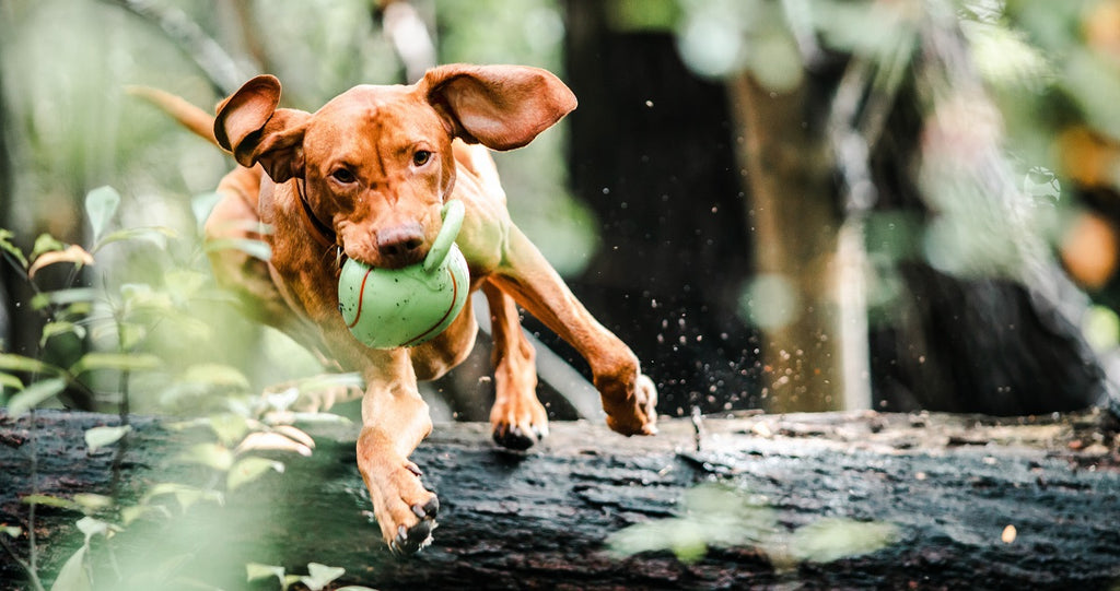 Dog catching a ball while jumping over fallen tree trunk.