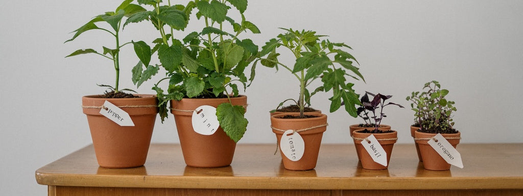 Different types of plants in pots in a row.