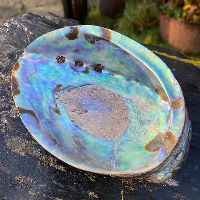 Abalone Shell Decorative Smudging Interior Design Inlay Jewelry Making from Crystal Cabin
